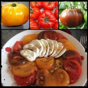 carpaccio tomate/mozzarella